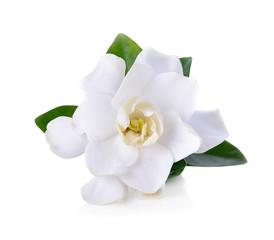 Papiers peints Fleur Gardenia flowers on white
