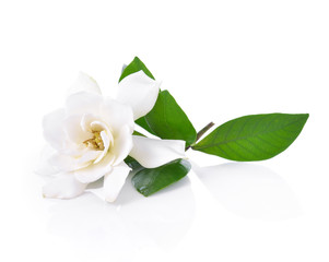 Photo sur Aluminium Fleur Gardenia flower on white