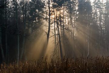 Photo sur Aluminium Cappuccino Rzeka Supraśl, Puszcza Knyszyńska, Grudniowy ciepły dzień, Ocieplenie klimatu