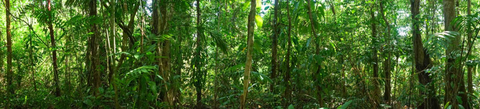 Panoramic Jungle Picture