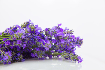 Tuinposter Lavendel beautiful bouquet of blue lavender on white background