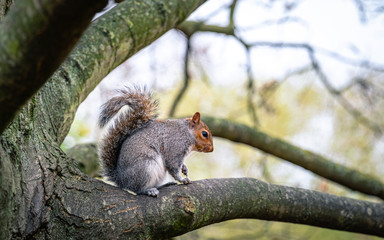 Fotorolgordijn Eekhoorn squirrel on a tree