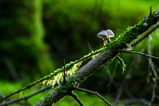 Moss and mushrooms on log in forest