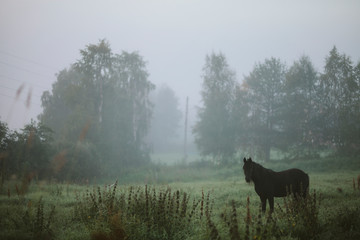 Horse in foggy meadow Fotobehang