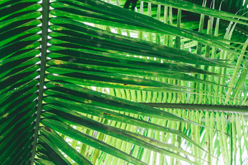 Green palm leaves as background.Palm Sunday concept. Wall mural