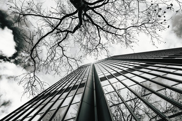 Glass surface of skyscrapers view in district of business centers. black and white