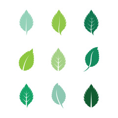 Mint leaves flat vector color icon