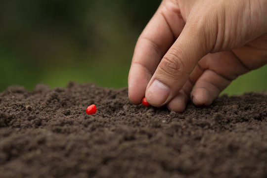 Hand sowing seeds of vegetable on soil at garden, The gardener growing a vegetable by seed