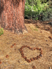 Valentine Heart In The Forest