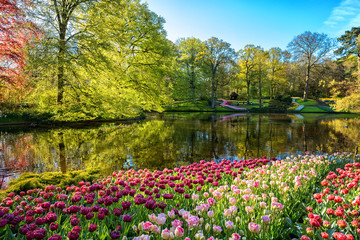 Amazing nature landscape, royal garden Keukenhof at spring. Scenic view of famous park with colorful tulips, green lush foliage, blue sky and reflection in the water, travel background, Netherlands