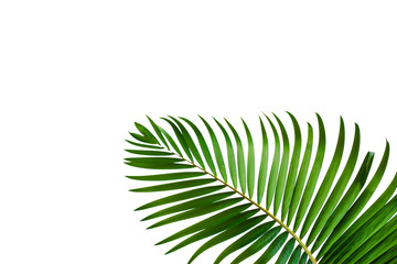 Wall Mural - leaves of coconut isolated on white background