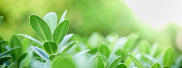 Tuinposter Natuur Close up of nature view green leaf on blurred greenery background under sunlight with bokeh and copy space using as background natural plants landscape, ecology cover concept.