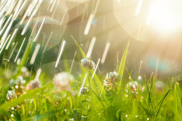 Foto auf Acrylglas Beige Beautiful natural background with clover, sun and raindrops. Art Magical summer landscape with bokeh