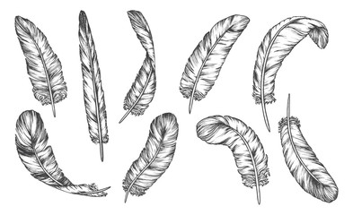 Hand drawn sketch feathers, bird plumage and quill Fotomurales