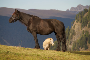 horse and pony