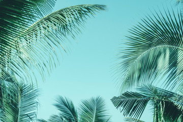 Foto auf AluDibond Palms tropical palm leaf background, coconut palm trees perspective view