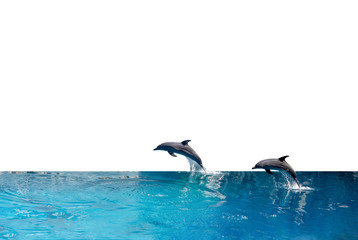 Close up Two Dolphins are Jumping on The Water Surface Isolated on White Background with Clipping Path