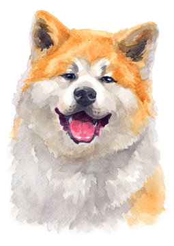 Water colour painting of Akita 116