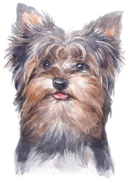 Water colour painting of York Shire Terrier 149