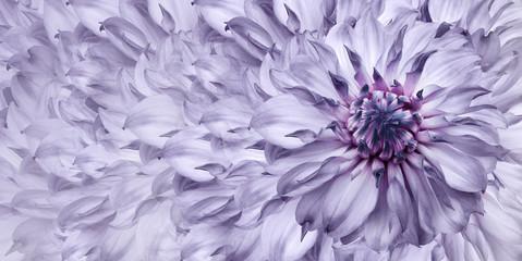 Fototapeten Flieder Floral light purple background. A bouquet of purple flowers dahlias. Close-up. floral collage. Flower composition. Nature.