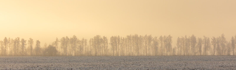 Spoed Foto op Canvas Beige Trees in the snow and fog at dawn