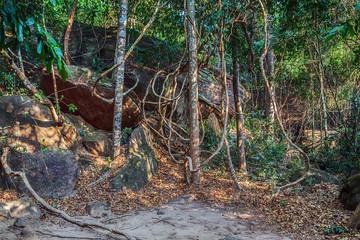 Papiers peints Noir Kbal Spean Jungle Walk national park in Cambodia