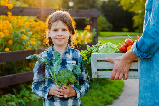 Children little girl holding mom a basket of fresh organic vegetables with the home garden.