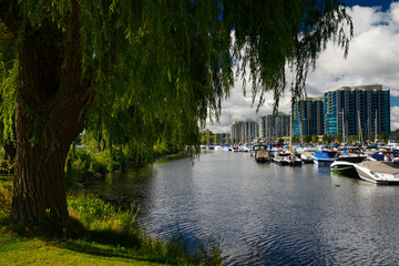 Willow tree over Barrie Ontario Marina on Kempenfelt Bay with boats and condos