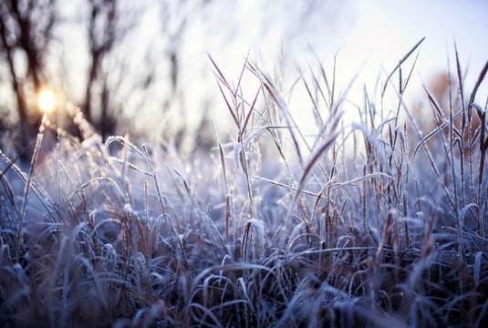 natural background with field with dry grass covered shiny transparent crystals of cold frost and snow cover in winter Sunny morning