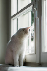 Side view of cat looking out of window with his image refelcted on the glass