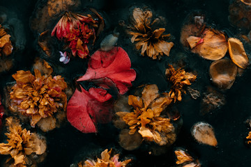 flowers that have fallen from the trees and float in stagnant water that looks like a picture