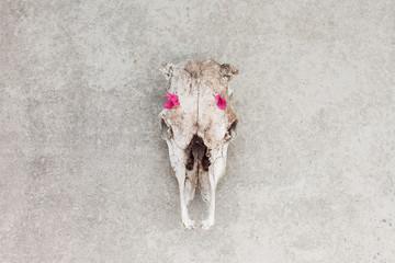 Dead bones, new life