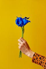 A female hand holding a dahlia flower