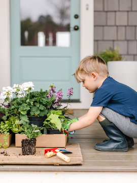 Little boy selecting spring plants