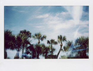 Instant Film Photograph of Palm Trees Against A Blue Sky With Sun Flare