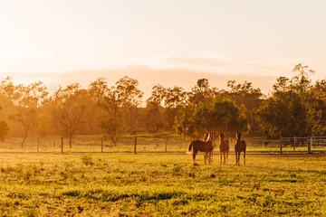 Arabian horses at sunrise