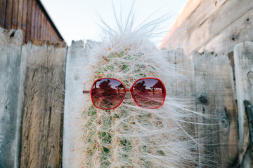 Cactus with sunglasses against wooden fence