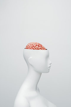 Female white mannequin with the top of the head opened. Can see the brain inside