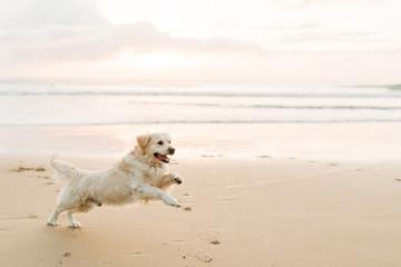 Dog running on sand Fotobehang