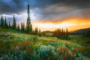 Golden sunset with wildflowers in the Colorado Rockies, USA. Fotobehang