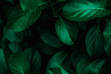 Deurstickers Planten tropical leaves, abstract green leaves texture, nature background