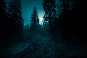 Fotobehang Zwart Full moon through the spruce trees in magic mystery night forest. Halloween backdrop.