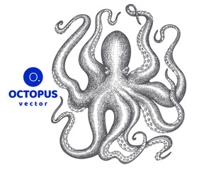 Octopus illustration. Hand drawn vector seafood illustration. Engraved style squid. Retro zoology image