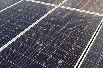 Flying Bird Poop Spreading on Solar Panel Surface