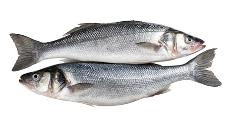 Two fresh seabass fishes isolated on white background Fotobehang