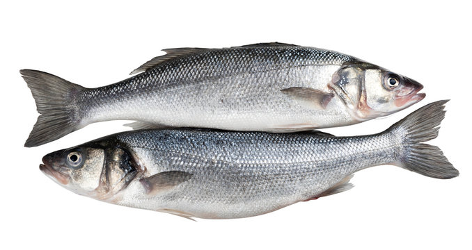 Two fresh seabass fishes isolated on white background