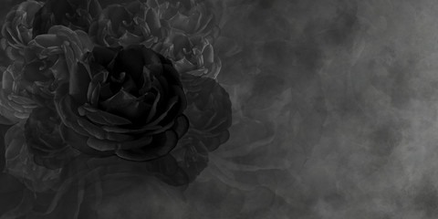 Textured black rose and black cement background, wallpaper,name card, copy space Wall mural
