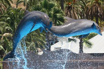 Foto auf Acrylglas Delphin Delphin