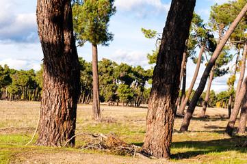 Tierra de pinares, campos de Castilla