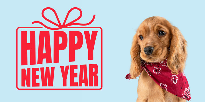 Young dog, puppy or pet isolated on blue studio background wishes happy New Year and Merry Christmas. Concept of Christmas, 2020 New Year's, winter mood. Copyspace, flyer, postcard. Emotions, animals.